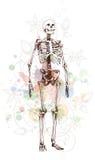 Skeleton sketch & floral calligraphy ornament Stock Images
