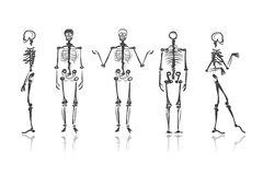 Skeleton sketches for your design Royalty Free Stock Photo