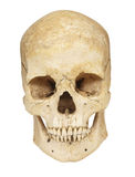 Skeleton skull bones. Close up of a skeleton on white background with clipping path Stock Photos