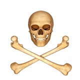 Skeleton skull with bones isolated with white Royalty Free Stock Photos