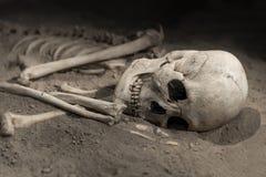 Skeleton Stock Image