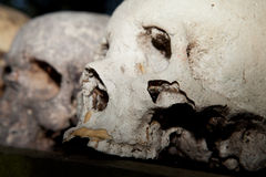 Skeleton skull sacrifice death Royalty Free Stock Photo