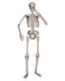 Skeleton Smoking a Cigarette Stock Photos