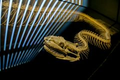 The skeleton of snake in the lighting background royalty free stock photos