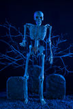 Skeleton standing at the graveyard Royalty Free Stock Photos