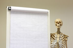 Skeleton student Royalty Free Stock Photography