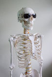 Skeleton with sunglasses Stock Images