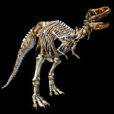 Skeleton T-Rex Stock Images