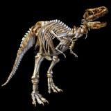 Skeleton T-Rex. 3d render a skeleton of the dinosaur t-rex than illustration Stock Images