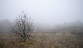The skeleton tree on the background of the morning fog royalty free stock photography