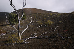 Skeleton Trees, Lava Field, Hawaii. The remains of dead trees populate a high lava field in Volcanoes National Park on the Big Island of Hawaii Royalty Free Stock Image