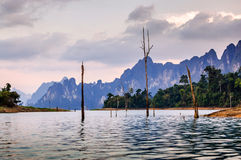 Skeleton trees in water at dusk, Khao Sok National Park Stock Photos
