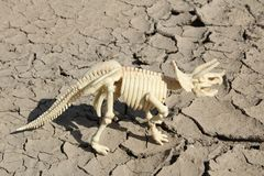 Dinosaur skeleton of Triceratops. This is skeleton of Triceratops - toy Stock Image
