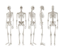 Skeleton turnaround Royalty Free Stock Images