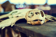 Skeleton of a turtle Royalty Free Stock Image