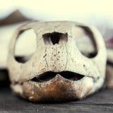 Skeleton of a turtle Stock Photos