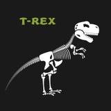 Skeleton tyrannosaurus Rex. Bones and skull of  dinosaur.  Royalty Free Stock Photos