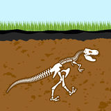 Skeleton of  Tyrannosaurus Rex. Dinosaur bones in Earth. Fossil. Ancient fearsome animal. Slice through  soil. archaeological excavations. Prehistoric monster Stock Photo