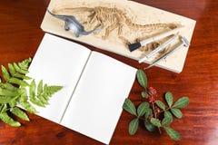 Skeleton und archäologische Werkzeuge Stockbild