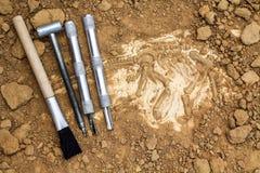 Skeleton und archäologische Werkzeuge Ausbildung für Grabungsfossil Simula Lizenzfreie Stockfotografie