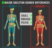 Skeleton Unterschiedbild Lizenzfreie Stockfotos