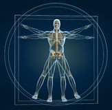 Skeleton in vitruvian Stock Photo
