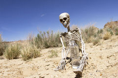 Skeleton Water Desert. Human skeleton in desert with bottle of water Royalty Free Stock Photography