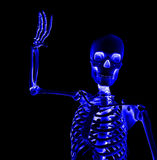 Skeleton Waving Stock Photo