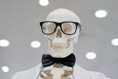 Skeleton wearing glasses and a white lab coat stock images