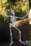Skeleton Royalty Free Stock Photo