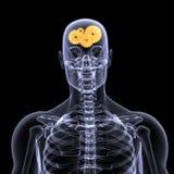 Skeleton X-Ray - Wheels a Turn Stock Photography