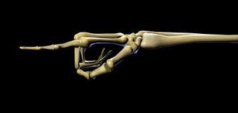 Skeleton zeigende Hand - mit Ausschnittspfad Stockbilder