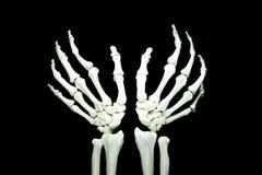 Skeletone Zdjęcie Stock
