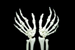 Skeletone. Skeleton arms of human left and right stock photo