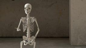 Skeletones Stock Photo
