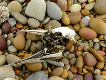 Skeletonised Birds head Royalty Free Stock Image