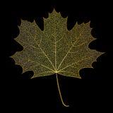 Skeletonized gold leaf Royalty Free Stock Image