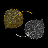 Skeletonized leaves Stock Photos