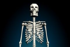 Skeletons. An x ray image of a group of skeletons. A suitable medical or Halloween based image Stock Image
