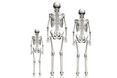 Skeletons Royalty Free Stock Photography