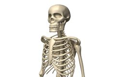 Skeletons Royalty Free Stock Photos