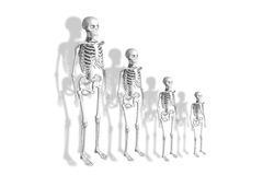 Skeletons Stock Photos