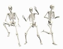 Skeletons Royalty Free Stock Photo