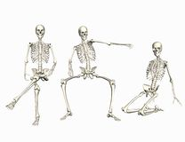 Skeletons Stock Image