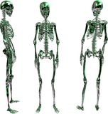 Skeletons. 3D rendering of female skeletons from different perspectives Stock Illustration