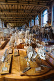 Skeletons of animals in the Gallery of Palaeontology and Comparative Anatomy in Paris Stock Photo