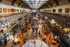 Skeletons of animals in the Gallery of Palaeontology and Comparative Anatomy in Paris Royalty Free Stock Photos