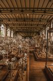 Skeletons of animals in the huge hall in Gallery of Paleontology and Comparative Anatomy at Paris. Paris, northern France - July 10, 2017. Skeletons of animals royalty free stock photography