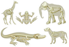 Skeletons of animals. Illustration of the skeletons of animals on a white background Royalty Free Stock Image