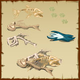 Skeletons of different fish and other items Stock Photo